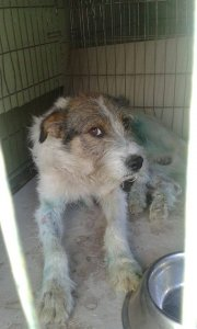ROBBIE NOT AVAILABLE TO ADOPT