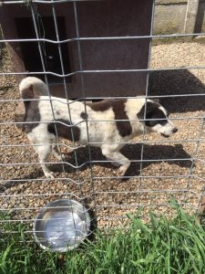 ADA NOT AVAILABLE TO ADOPT