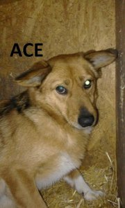 ACE NOT AVAILABLE TO ADOPT
