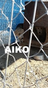 AIKO NOT AVAILABLE TO ADOPT