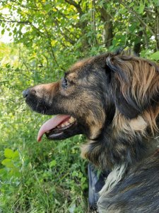 BOBITA AVAILABLE TO ADOPT TO AN EXPERIENCED HOME