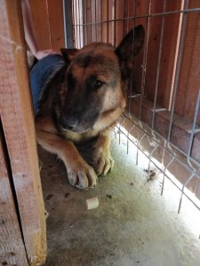 FINLAY NOT AVAILABLE TO ADOPT