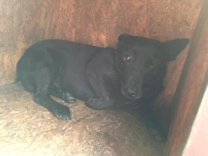 CAREY NOT AVAILABLE TO ADOPT