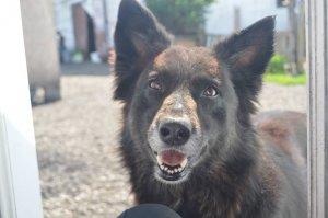 MONA (YARD DOG)