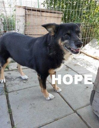 hope-nt-t